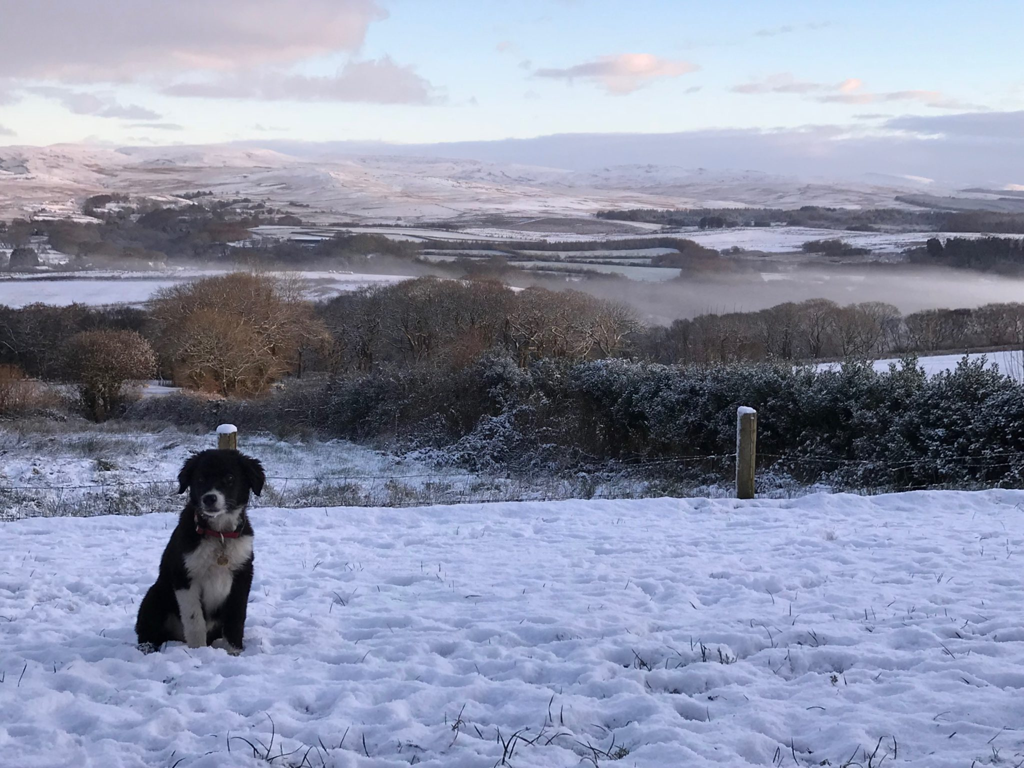 Cwtch Farm Dogs in Brecon Beacons
