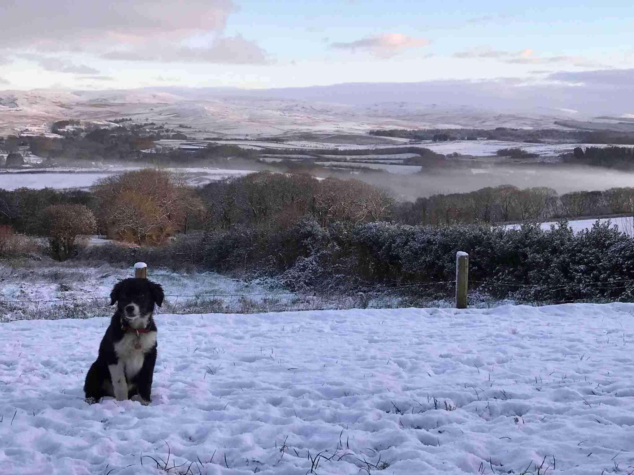 winter dog cwtch farm b&b