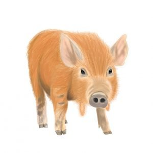 betty the pig