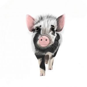 Neo the pig