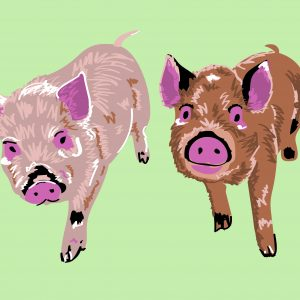 piggie-illustration-02